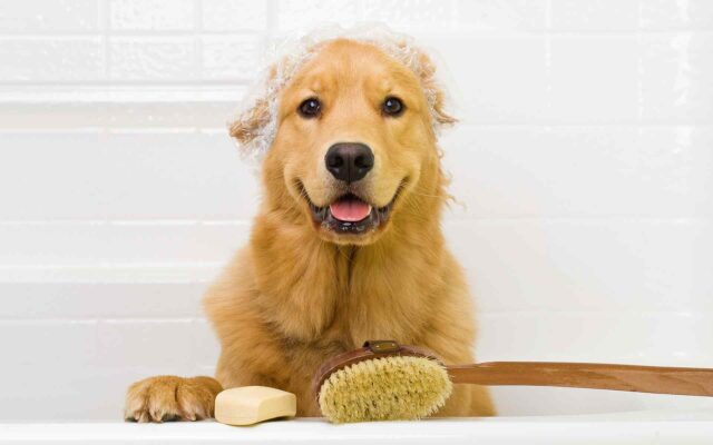 Tips and tricks: Puppy's First Grooming