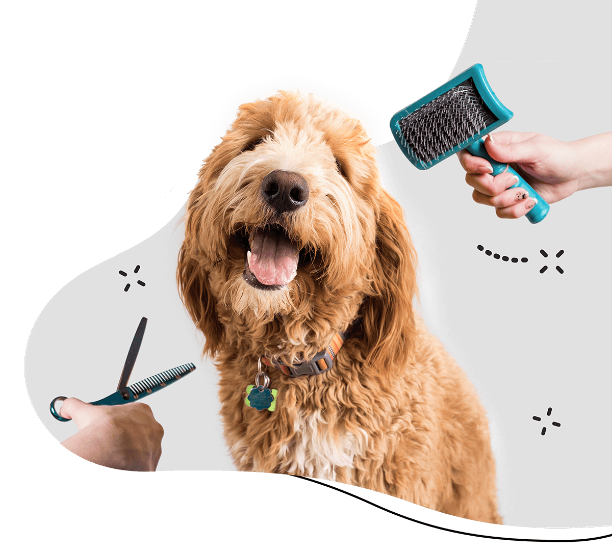 https://thecaninebeautyroom.co.uk/wp-content/uploads/2019/08/hero_home_3.png